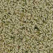 Casual Living Polyester and BCF Nylon Carpet